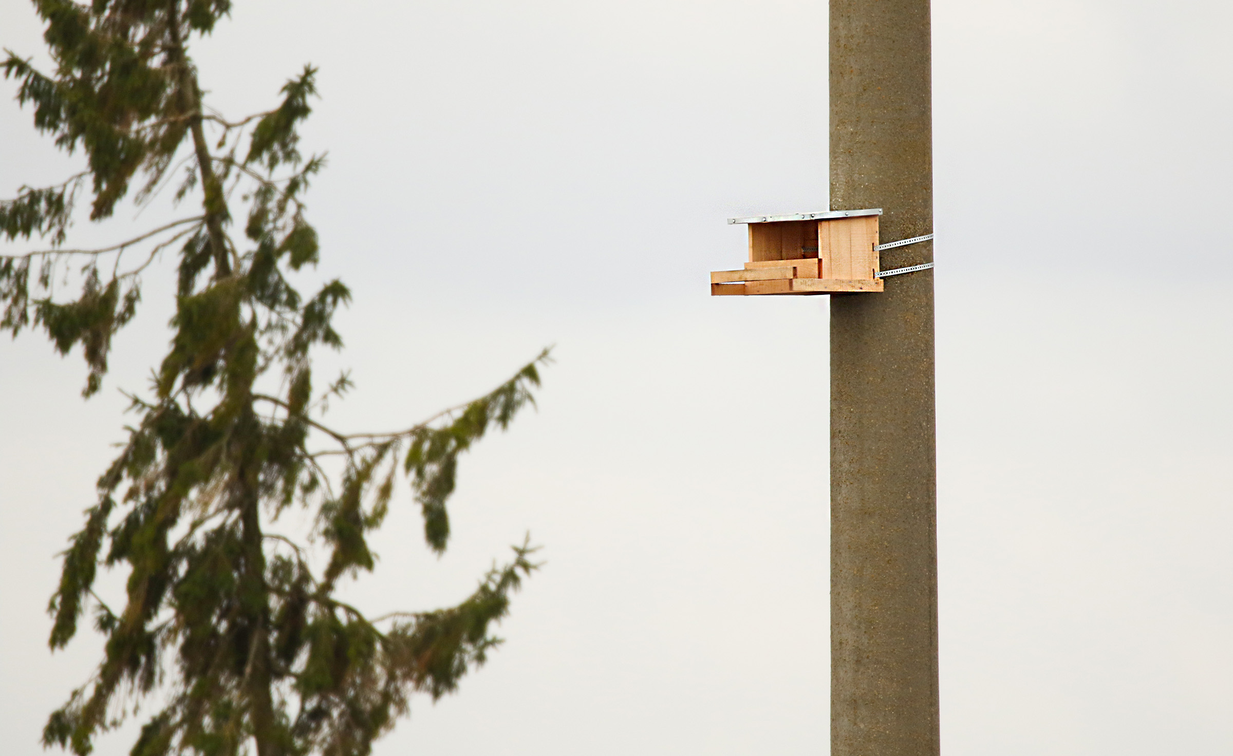 Installation of the birds' protection measures on the high voltage electricity grid coming to the end