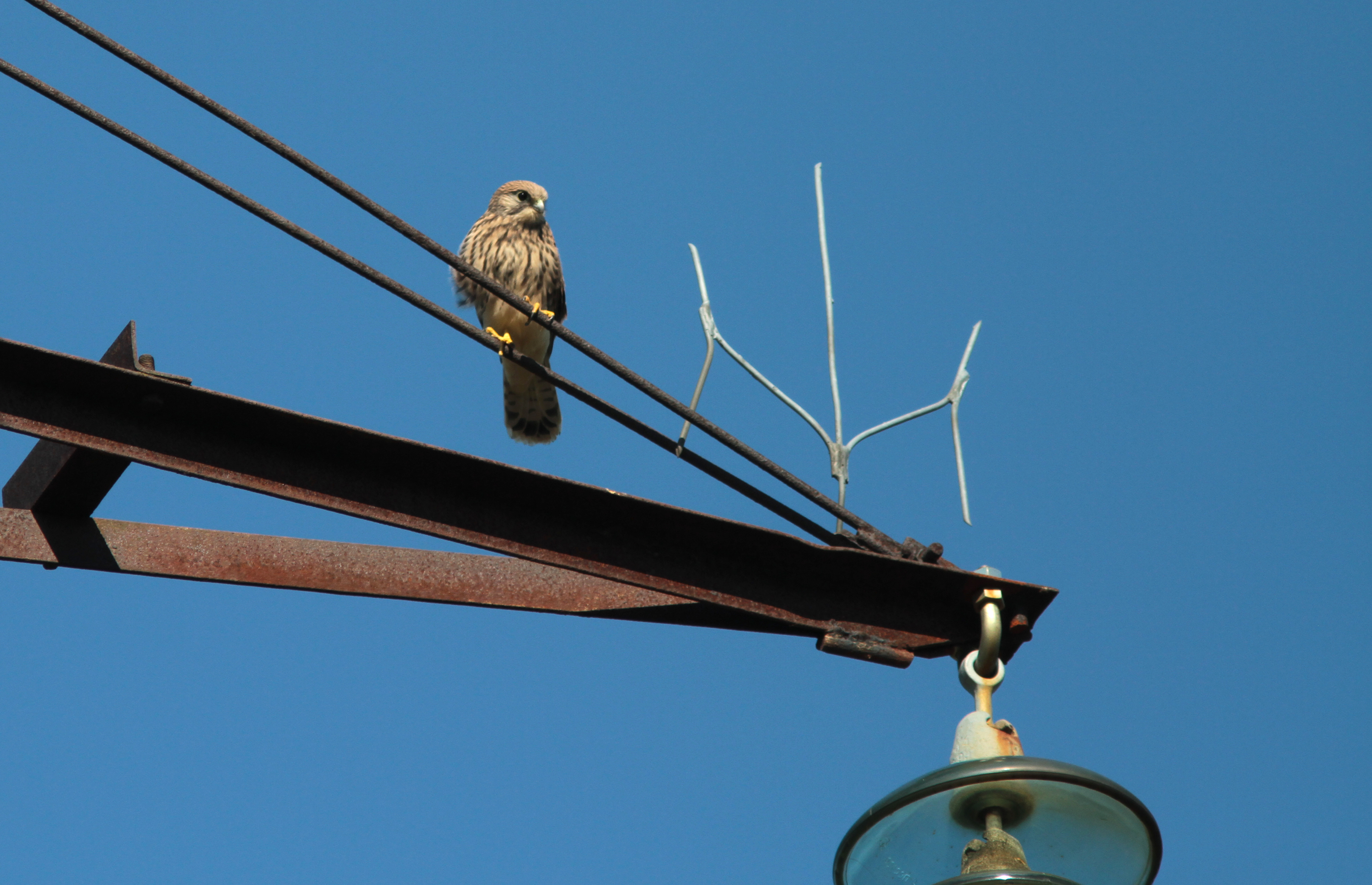 European Commission has approved the final LIFE Birds on Electrogrid report