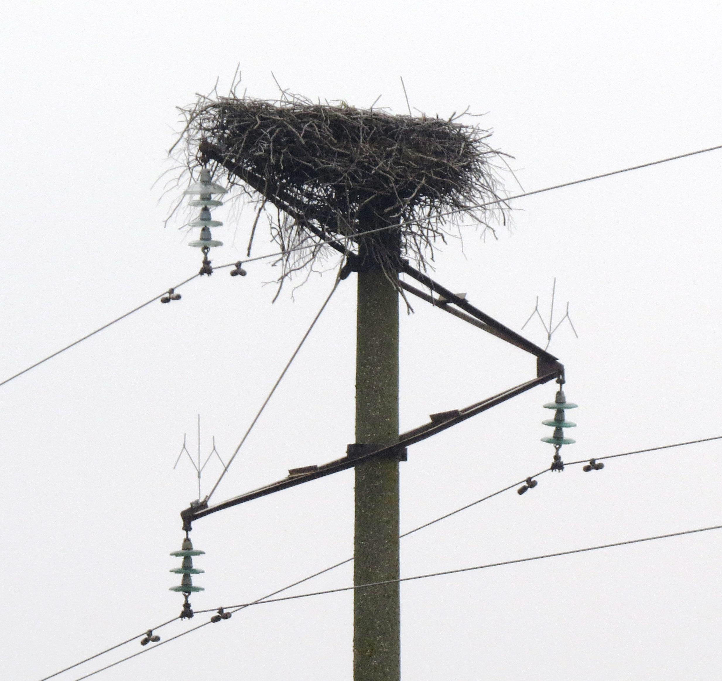 Paukščių lizdai ant aukštos įtampos atramų
