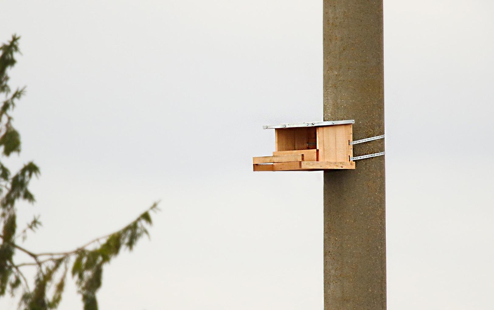 Tęsiamas paukščių apsaugos priemonių diegimas šalies aukštos įtampos elektros energijos perdavimo tinkle