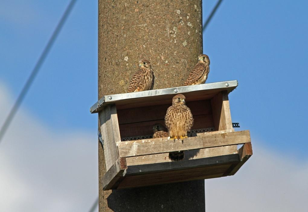 Įsibėgėjo paukščių apsaugos priemonių diegimas šalies aukštos įtampos elektros energijos perdavimo tinkle