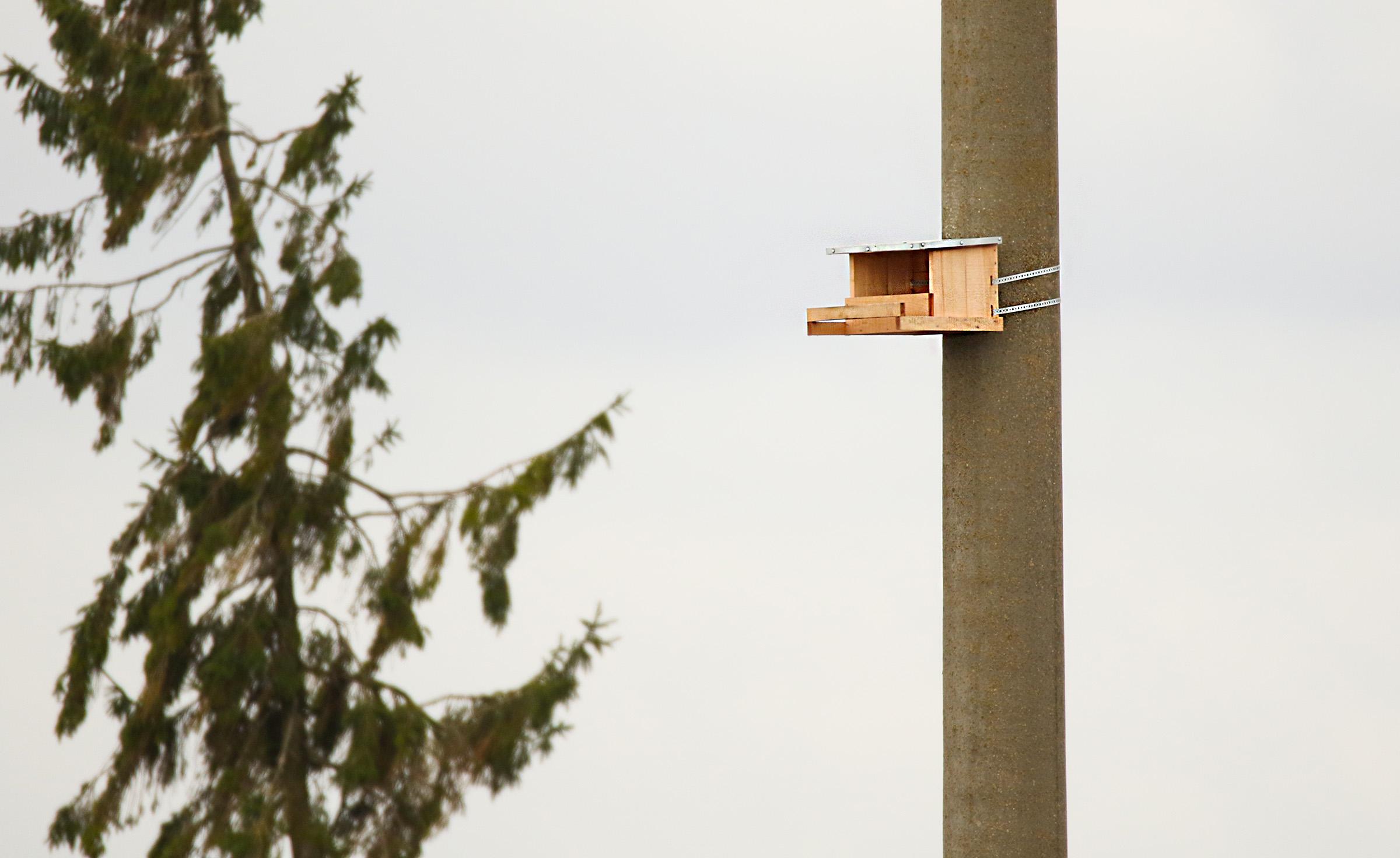 Projekto numatytas paukščių apsaugos priemonių diegimas šalies aukštos įtampos elektros perdavimo tinkle artėja prie pabaigos